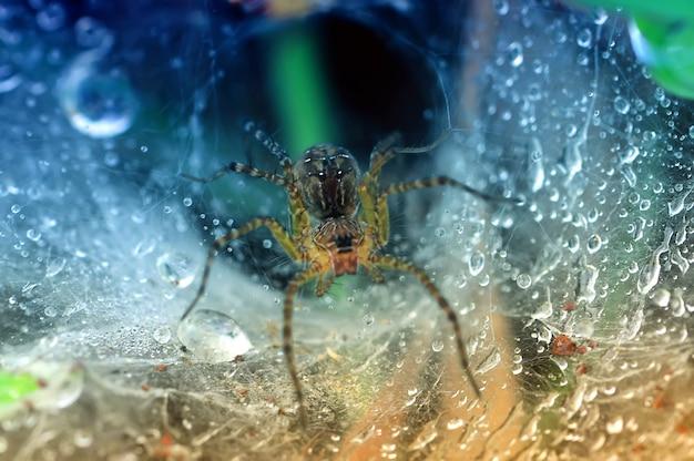 Een spin op een spinnenweb met druppels