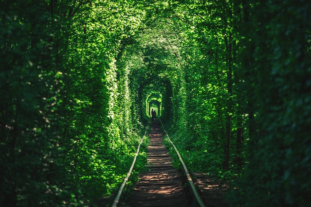 Een spoorweg in de de lente bostunnel van liefde