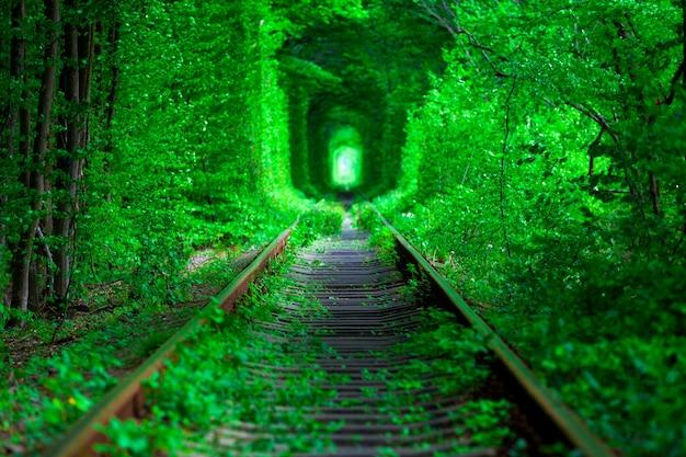 Een spoorweg in de lente bostunnel van liefde