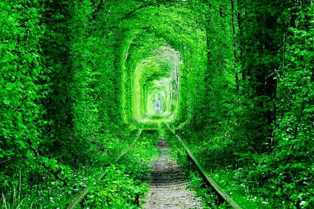 Een spoorweg in het bos