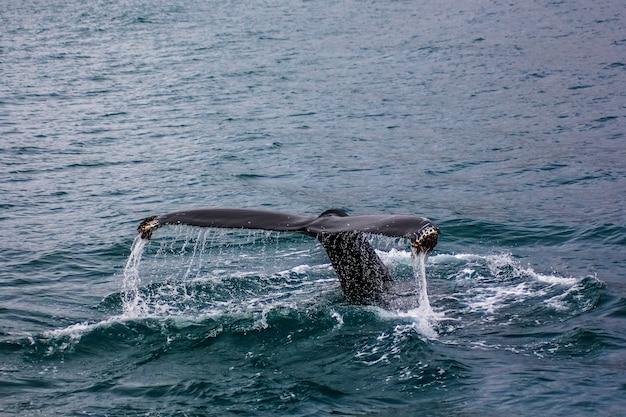 Een staart van een grote vis in het water