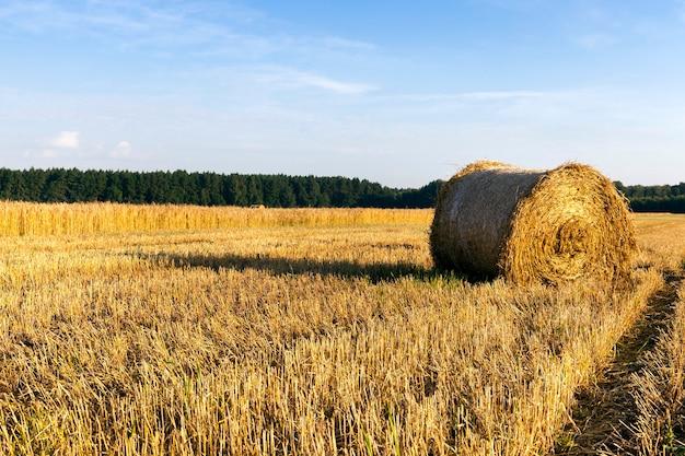 Een stapel droog stro van granen, een zomers landschap na het oogsten van graan