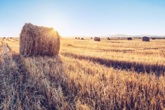 Een stapel hooi op een gebied van tarwe bij zonsopgang, altay, rusland