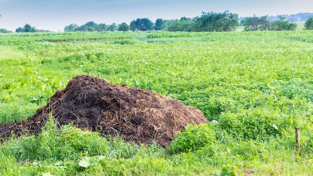 Een stapel mest voor het bemesten van het land, natuurlijke organische voeding van het land