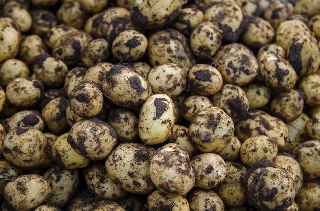 Een stapel verse jonge aardappelen vers gegraven aardappelen met grondvuil oogst oogst