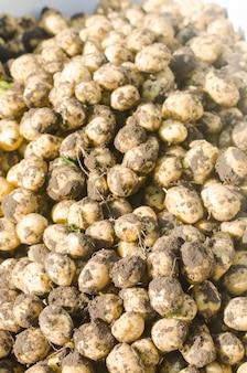 Een stelletje verse jonge gele aardappelen op het veld close-up