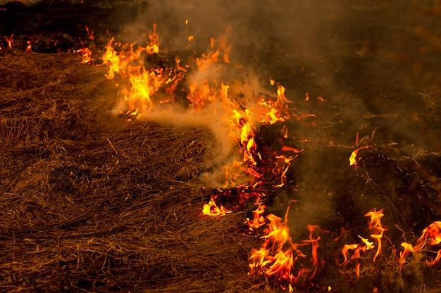 Een sterk vuur verspreidt zich in windstoten door droog gras, rokend droog gras, concept van vuur en verbranding van het bos
