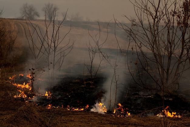 Een sterk vuur verspreidt zich in windstoten door droog gras, rokend droog gras, concept van vuur en verbranding van het bos.
