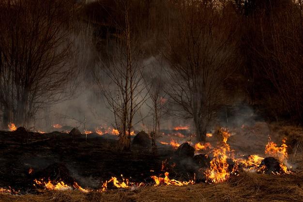 Een sterk vuur verspreidt zich in windstoten door droog gras, rokend droog gras