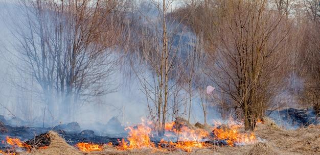 Een sterke brand verspreidt zich in windstoten door droog gras, rokend droog gras, concept van vuur en verbranding van het bos