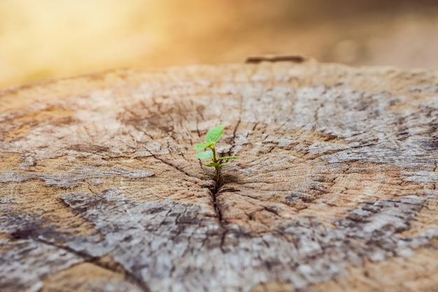Een sterke zaailing groeit in de middelste stam als een concept van ondersteuning bij het bouwen van een toekomst .. focus op nieuw leven