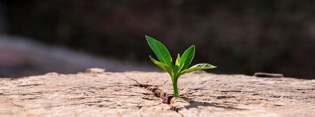 Een sterke zaailing groeit nieuw toekomstconcept voor levensgroei