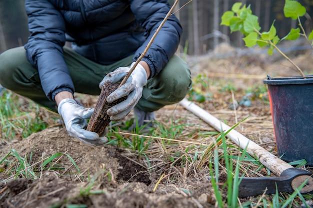 Een stervend bos herstellen met behulp van nieuwe bomen planten