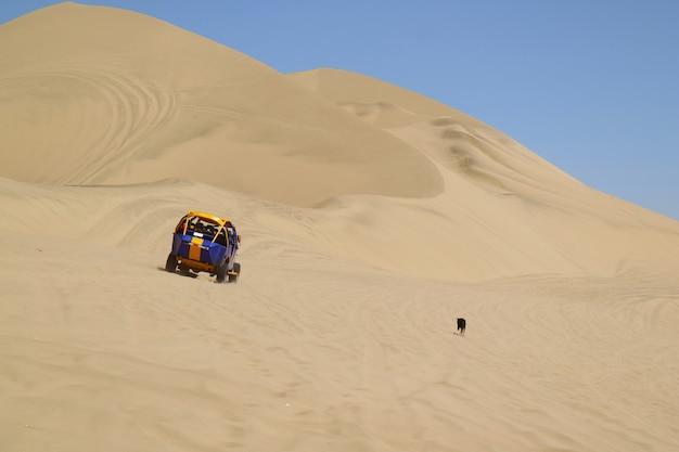 Een stoute hond die de lopende duinbuggy op de woestijnduinen achtervolgt van huacachina, ica-gebied, peru