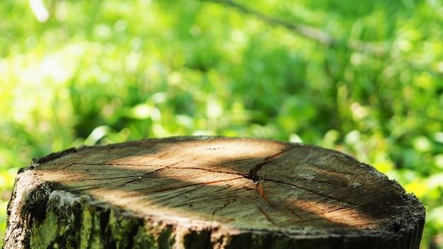 Een stronk in een herfst- of zomerbos als podium voor productontwerp, een gekapte boom en een onscherpe achtergrond als banner voor het weergeven van een product
