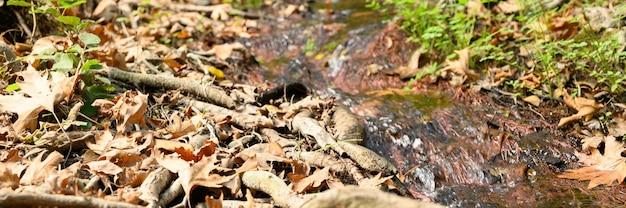 Een stroom die door de kale wortels van bomen in een rotsachtige klif en gevallen herfstbladeren stroomt