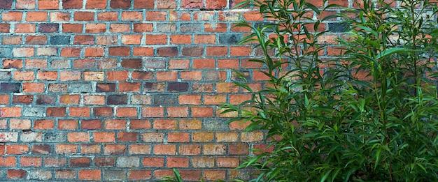 Een struik tegen een donkerrode bakstenen muur.