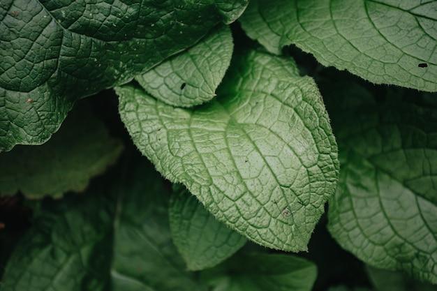 Een super close-up van enkele felgroene planten