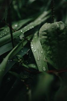 Een super close-up van enkele groene planten in het bos met regendruppels eroverheen