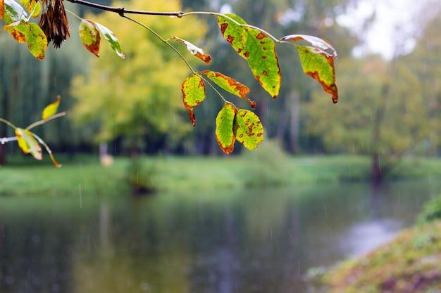Een tak met gele en groene bladeren boven het donkere water van de rivier