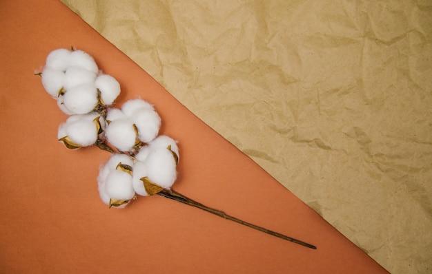 Een tak met witte pluizige katoenen bloemen ligt op een beige verfrommelde achtergrond. natuurlijke organische vezels.
