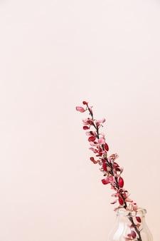 Een tak van droge berberisfamilie in een vaas op een roze achtergrond