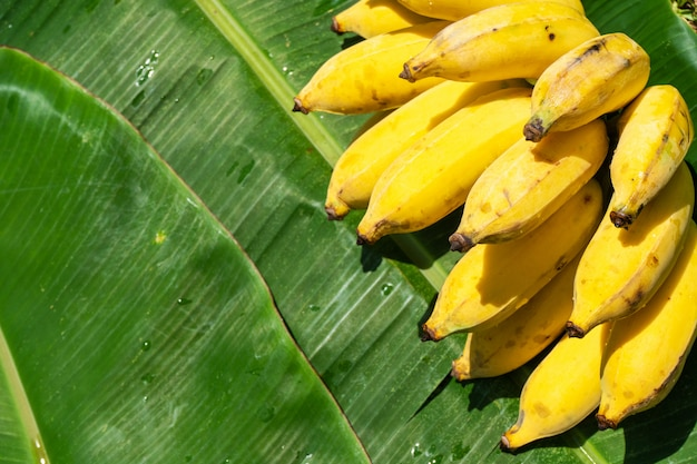Een tak van sappige gele bananen op een groene bananenblad. rijpe sappige vruchten.