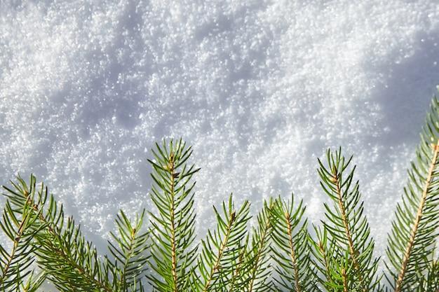 Een tak van sparren met groene naalden die op de witte sneeuw liggen. winter achtergrond