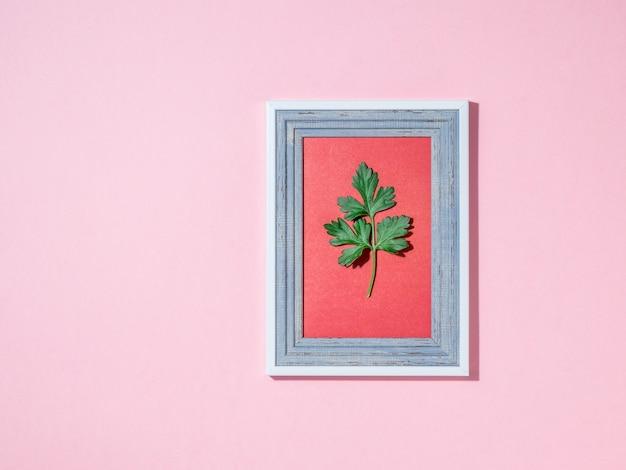 Een takje peterselie in een afbeeldingsframe op een roze achtergrond. handige, smaakvolle en smaakvolle kruiden.