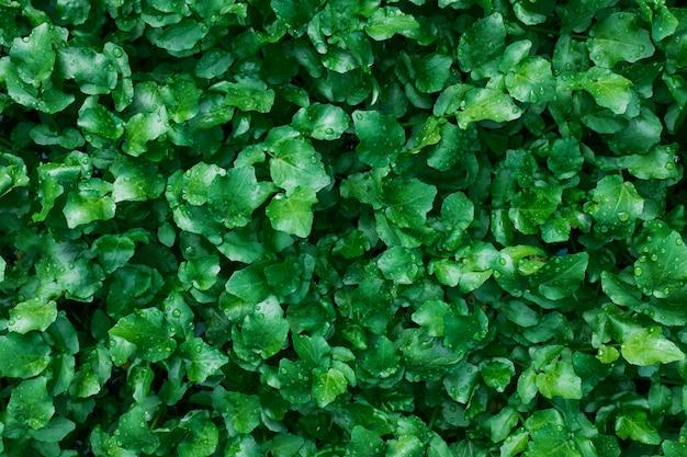 Een tapijt van sappige, jonge groene planten. als een volledig scherm