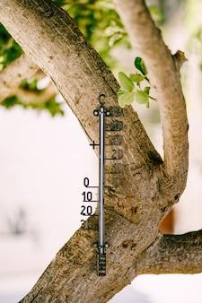 Een thermometer op een thermometer van de boom de zwarte plastic thermometer buiten