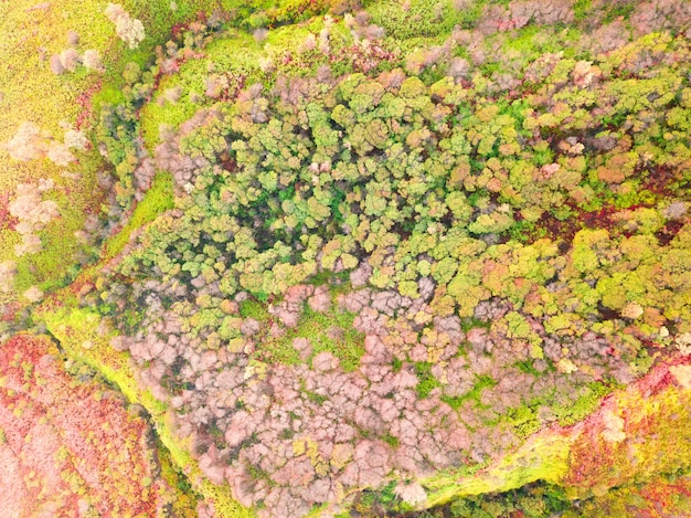 Een tropisch bos met een verscheidenheid aan bomen en planten. bloeitijd. luchtfoto verticaal naar beneden