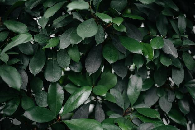 Een tropische plant close-up in het dichte struikgewas van de jungle. tropen