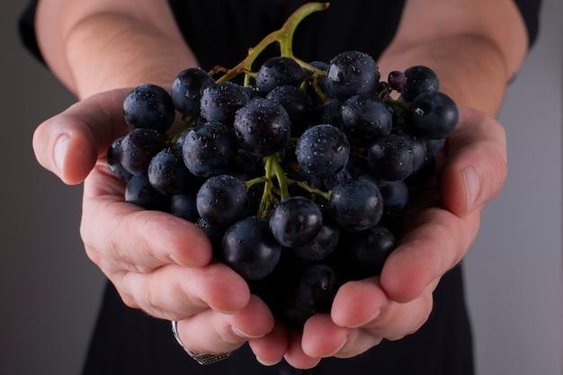 Een tros zwarte druiven in de handen van een persoon