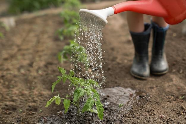 Een tuinbed water geven uit een gieter close-up.