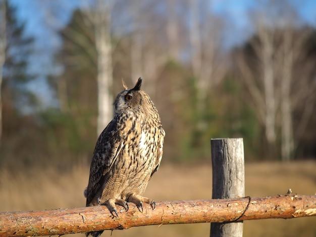 Een uil zit op een houten hek in een veld