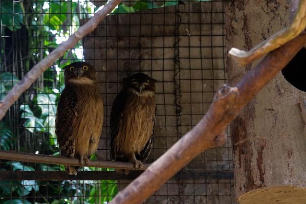Een uilvogels in een kooi in de dierentuin