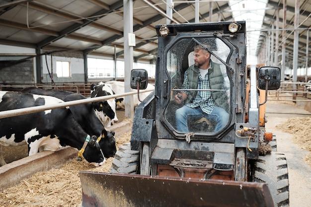 Een van de hedendaagse landarbeiders die in de tractor zit terwijl hij door het gangpad tussen rijen vee loopt en de weg schoonmaakt