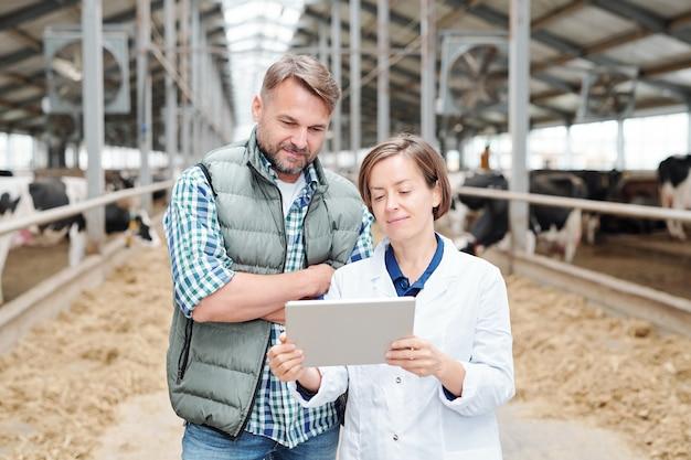 Een van de hedendaagse werknemers van een melkveebedrijf houdt een tablet vast terwijl ze haar collega online informatie over de veehouderij laat zien