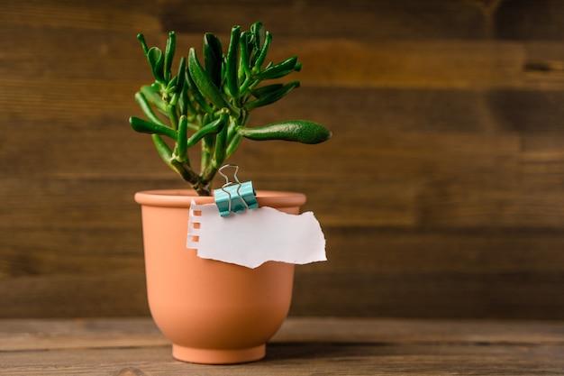 Een vel papier met ruimte voor tekst wordt met een paperclip tegen een pot met sappige planten gehouden