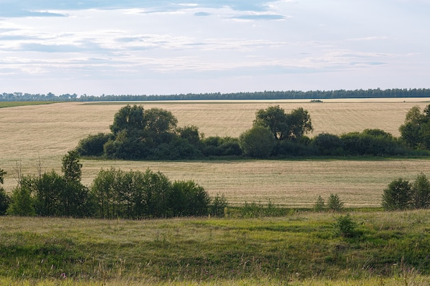 Een veld met gemaaid tarwe op een achtergrond van een bewolkte hemel. zomer landschap.