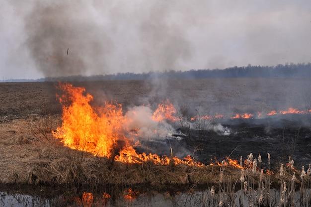 Een veld van droog gras staat in het vroege voorjaar in brand.