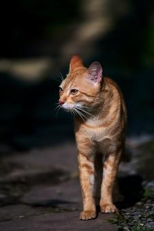 Een verdwaalde cyperse kat die alleen loopt
