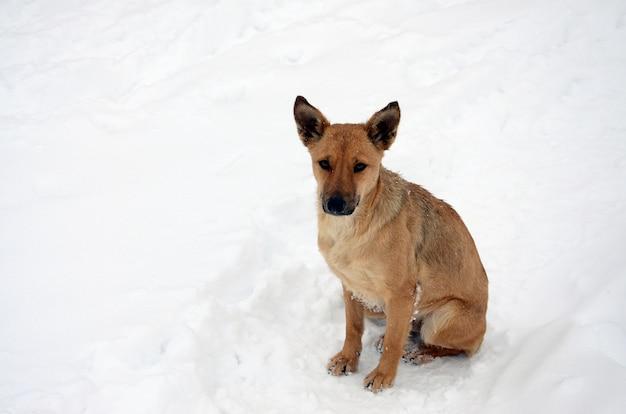 Een verdwaalde dakloze hond. portret van een droevige oranje hond op een sneeuwachtergrond
