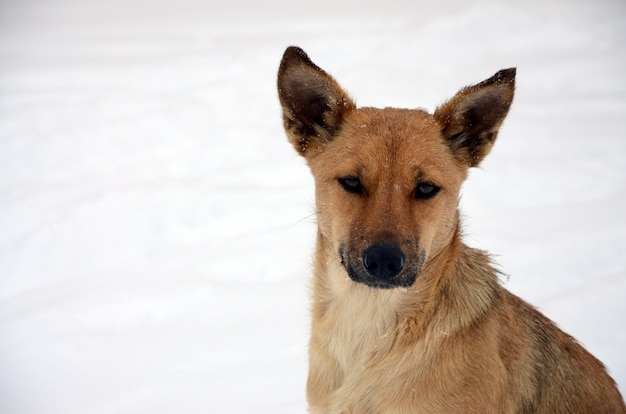 Een verdwaalde dakloze hond. portret van een droevige oranje hond op sneeuw