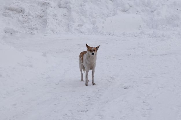 Een verdwaalde hond loopt in de met sneeuw bedekte
