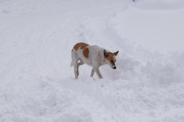 Een verdwaalde hond loopt in het met sneeuw bedekte park