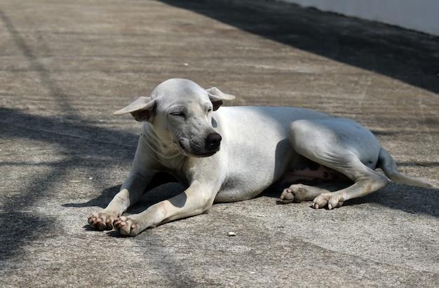 Een verdwaalde straathond. het probleem van zwerfdieren op straat.