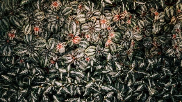 Een verhoogde weergave van exotische bladeren achtergrond