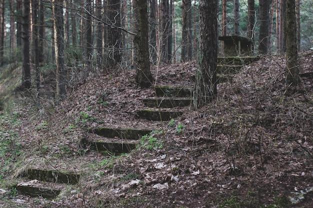 Een verlaten trap in het bos leidt naar een bankje op een heuvel. de trap is bezaaid met bladeren. rond de bomen. horizontaal.